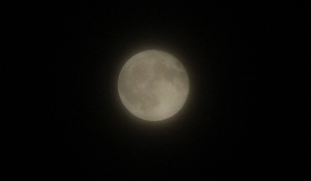 cropped moon - frost 11-12-19.jpg